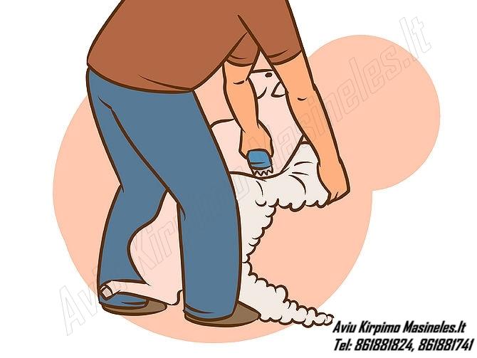 Kaip kirpi avis? Kada kirpti avis? Aviu kirpimo patarimai , aviu kirpimas